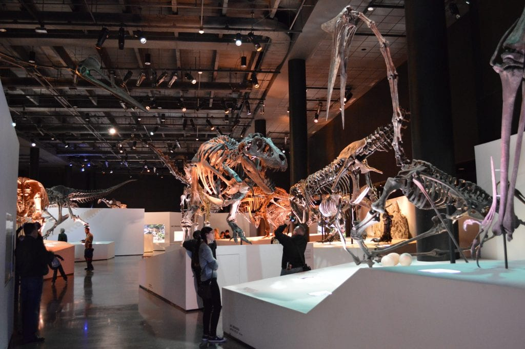 Houston Museum of Natural Sciences.