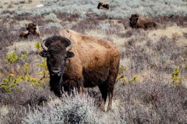 Wood Buffalo National Park6
