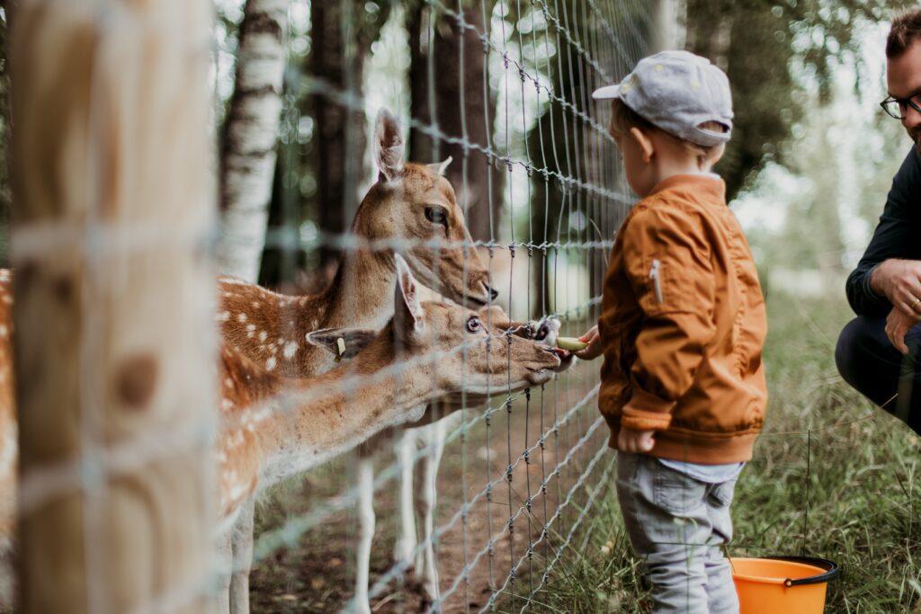 kid in zoo