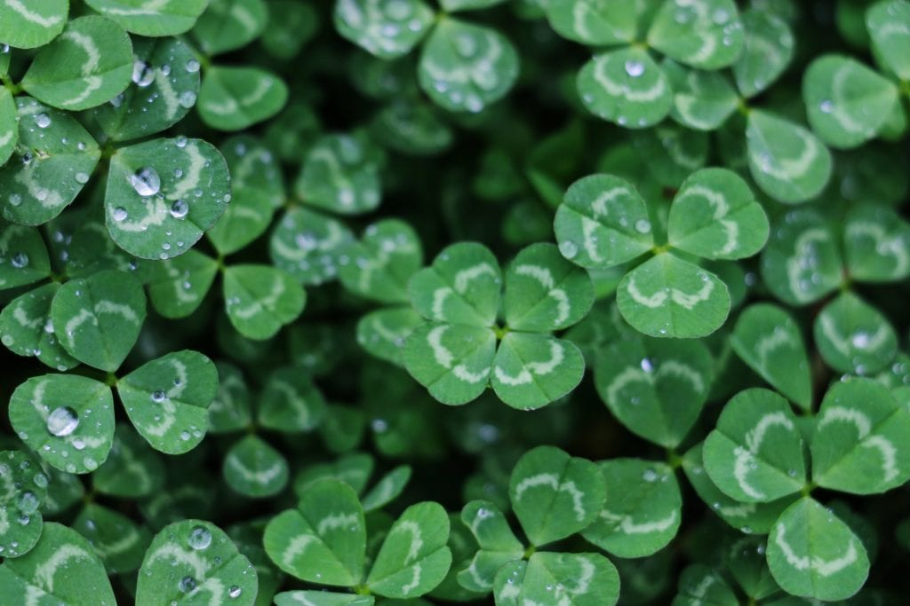 St Patrick's Day: Facts, History & Traditions in 10 minutes 3