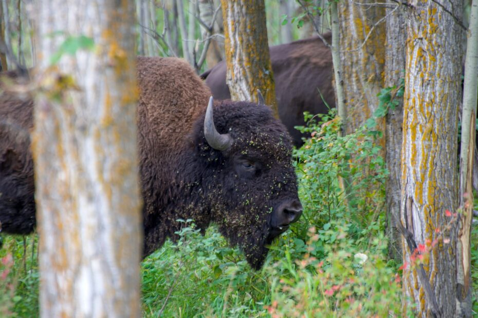 10 Best Places to Explore Canadian Wildlife! 1
