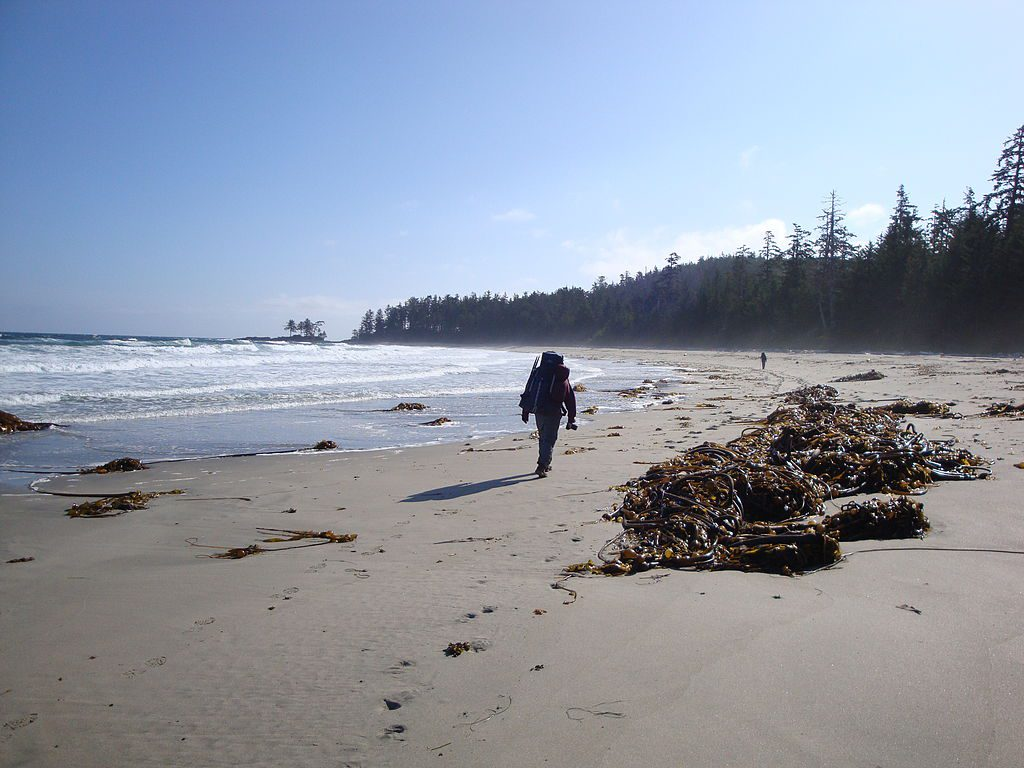 Adventurous Realm: 7 Best Campgrounds Vancouver Island 2