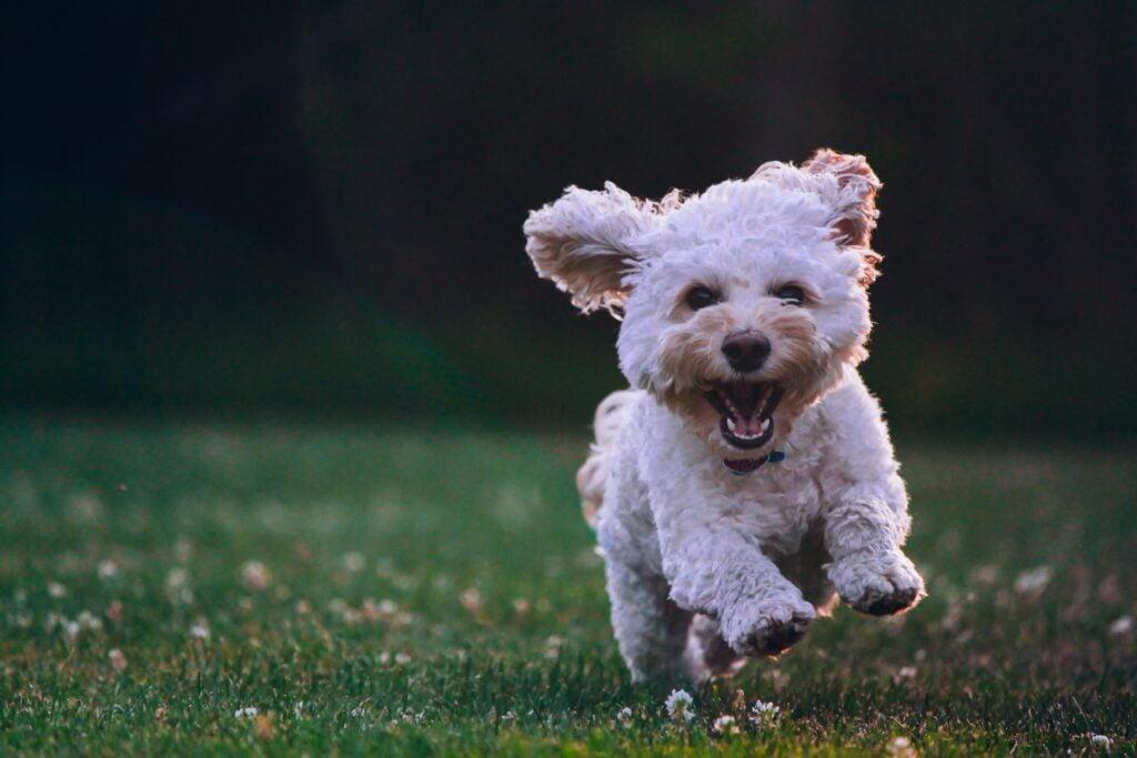 calagary dogcare