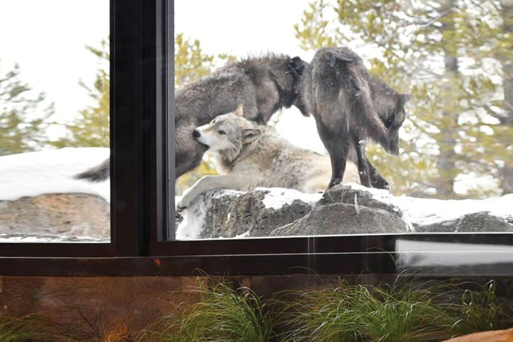 The Grizzly & Wolf Discovery Centre
