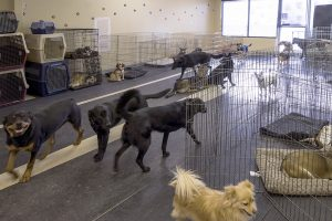 Especially For Pets Calgary Business Story