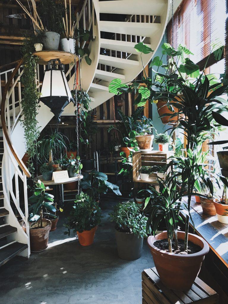 Beyond The House Garden Centres in Ottawa