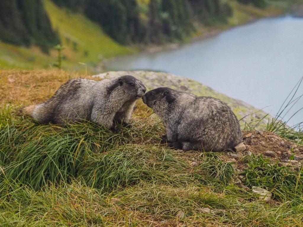 Don't Miss Best 10 Whistler Hikes 1