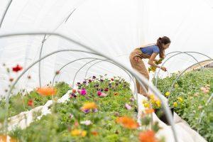 Les Serres Robert Plante Greenhouses