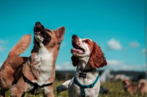8 Super Dog Daycare Edmonton to Check Out For Your Pets 1