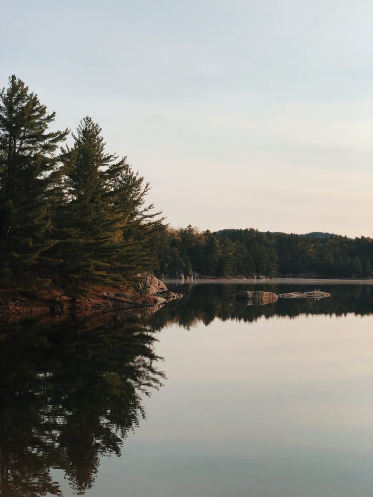 Pine trees on the shoreline of a river