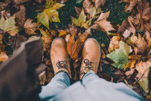 The leaf or fall season