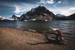 icefields tour