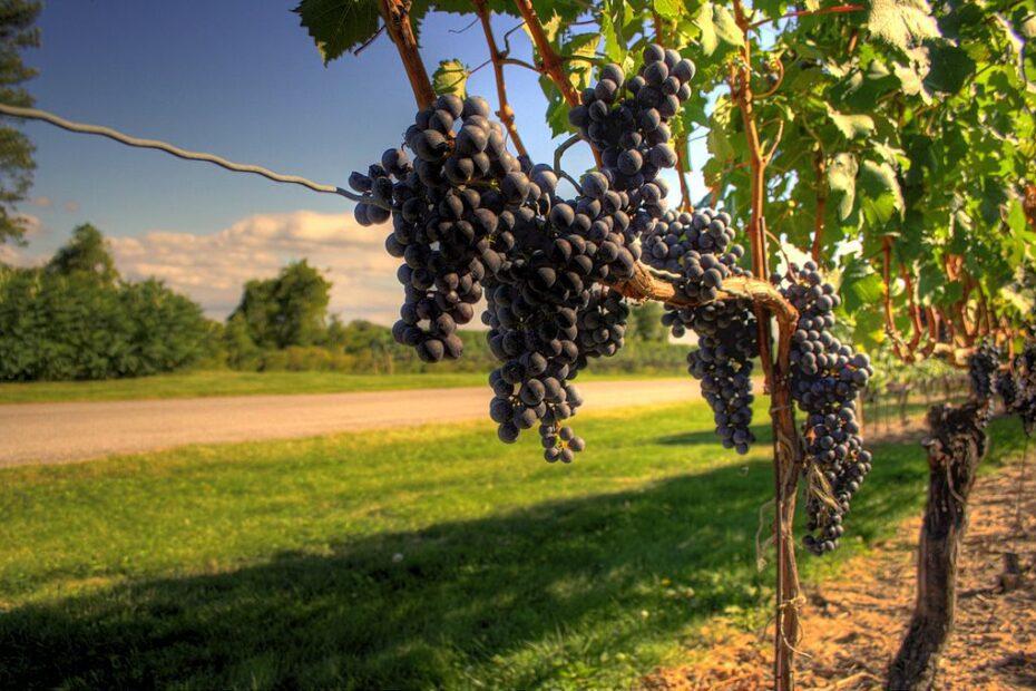 10 Niagara on the Lake Wineries 1