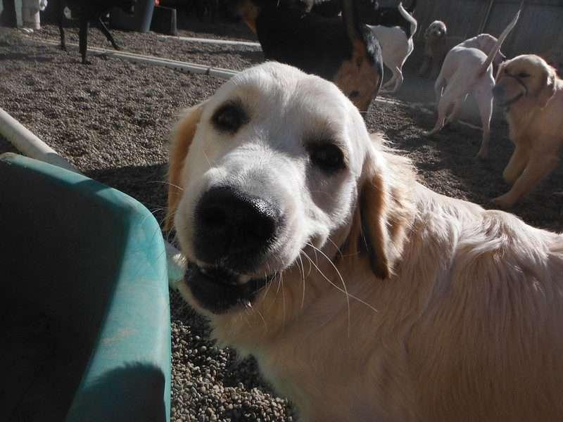 Dog Daycare Victoria BC
