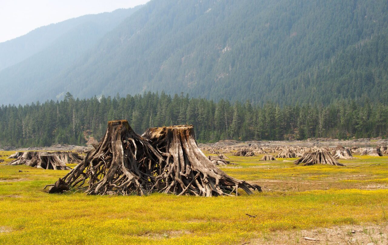 What to See on Vancouver Island? 14 Best Places 15