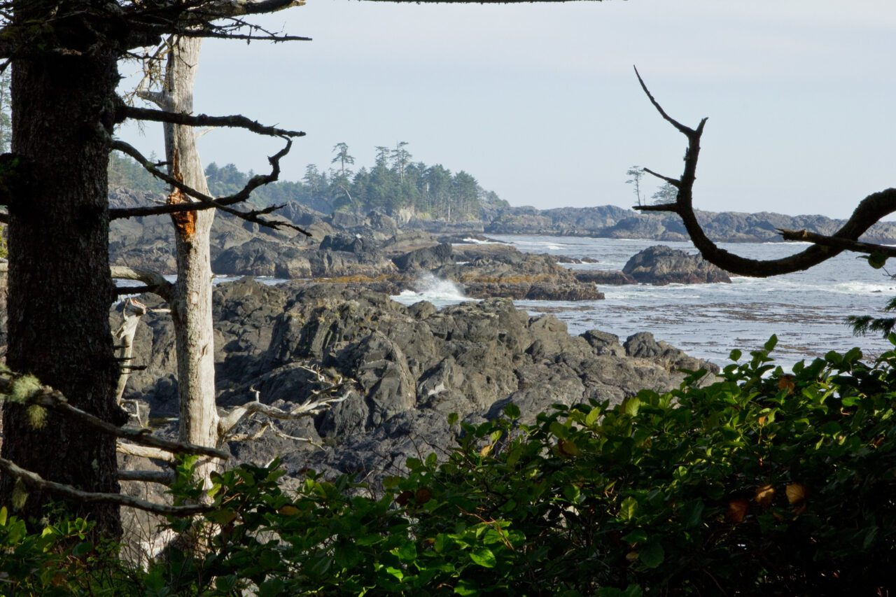 What to See on Vancouver Island? 14 Best Places 12