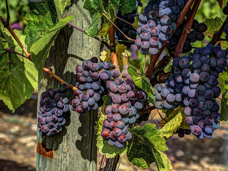 Okanagan Valley Wineries